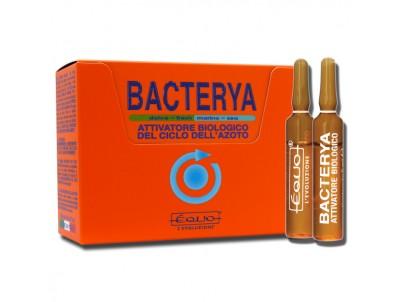 BACTERYA - 12