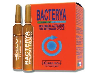 Bakteri Kültürleri